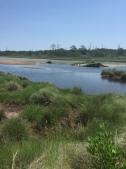 Salt marsh on a deserted barrier island