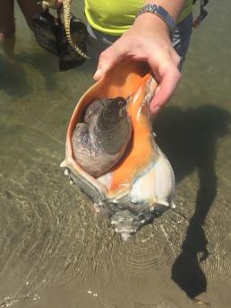 Welk found on the beach