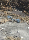 Net pollution on an uninhabited barrier island
